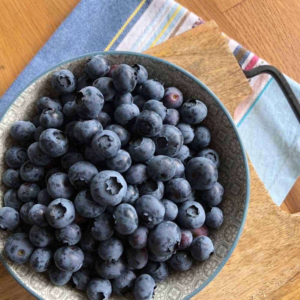 Blaubeeren - Blueberries
