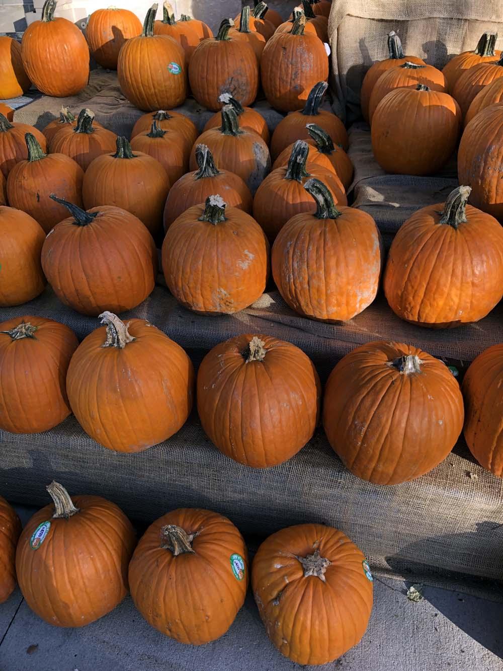 Pumpkins / Kürbisse in den USA zu Halloween