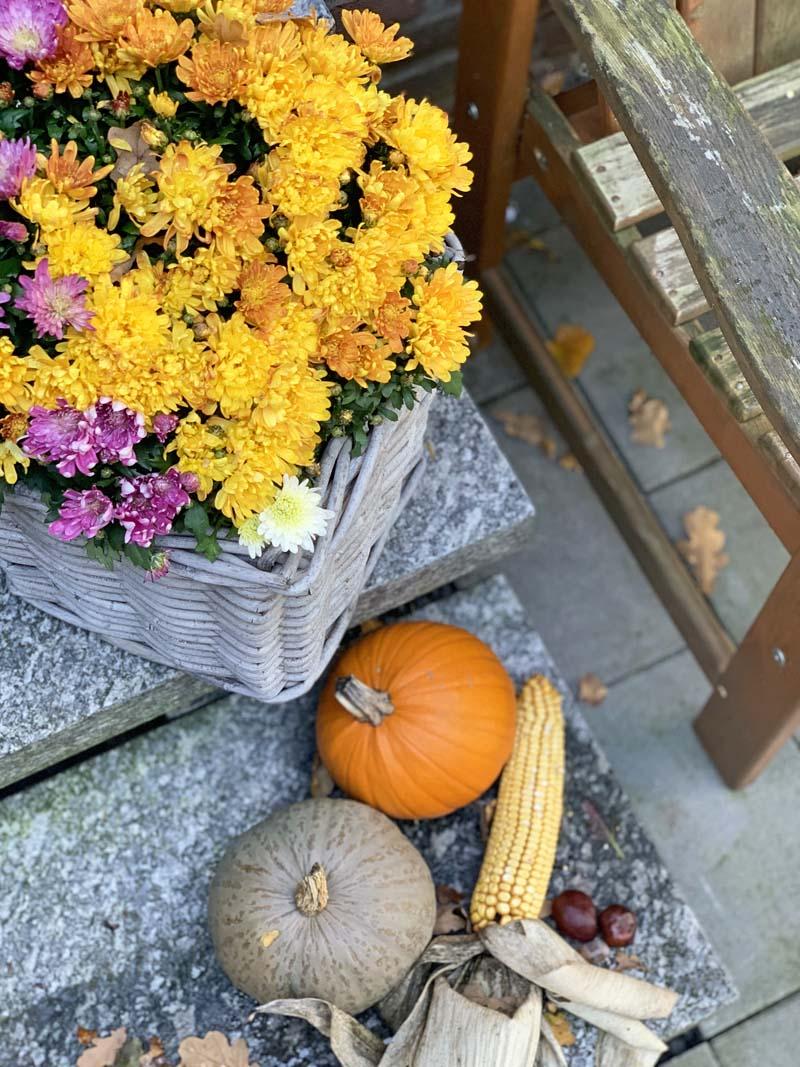 Herbstdekoration mit Astern und Kürbissen