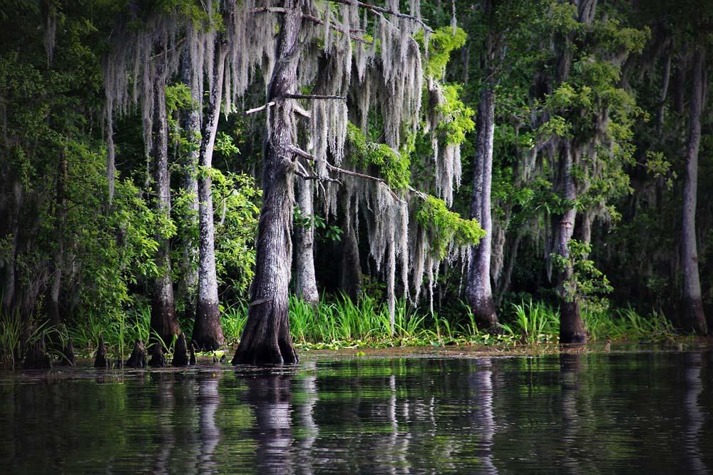 Swamp in South Carolina